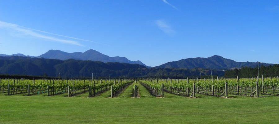 Straw Lodge Marlborough Accommodation Vineyard Views