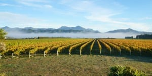 Straw Lodge Marlborough Accommodation Vineyard Mist