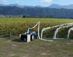 Strawlodge vineyard 002