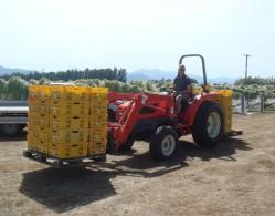 Strawlodge vineyard 003