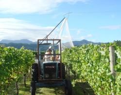 Strawlodge vineyard 004