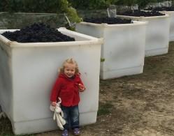 Strawlodge vineyard 005