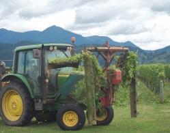 Straw Lodge Marlborough Accommodation vineyard